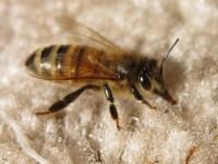 bee-carpet-2