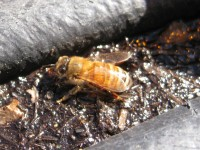 bee-mulch-1