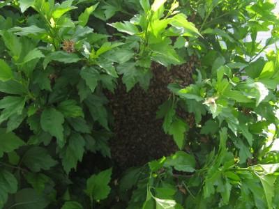 06-14-swarm-img_3938