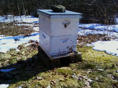 March Bees 004
