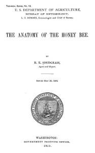 Anatomy.of.the.Honeybee.Snodgrass.1910